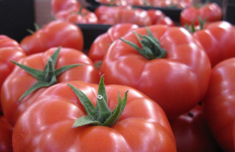 Pomidory na cykl jesienny dostosowane do Twoich potrzeb