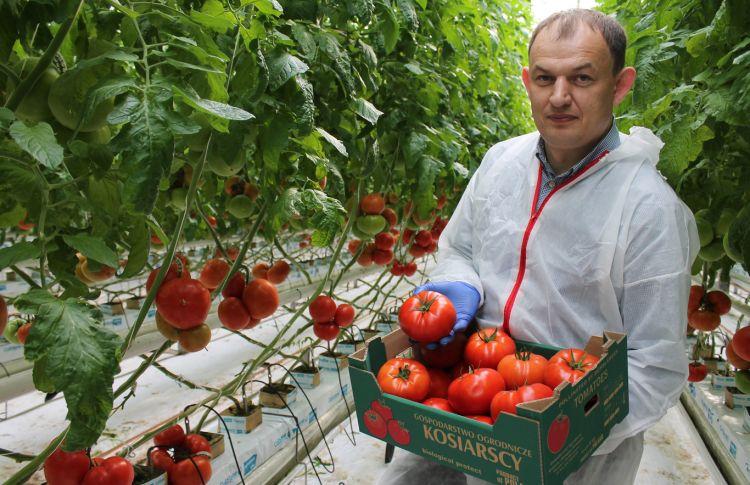 Czy zabraknie pomidora czerwonego?