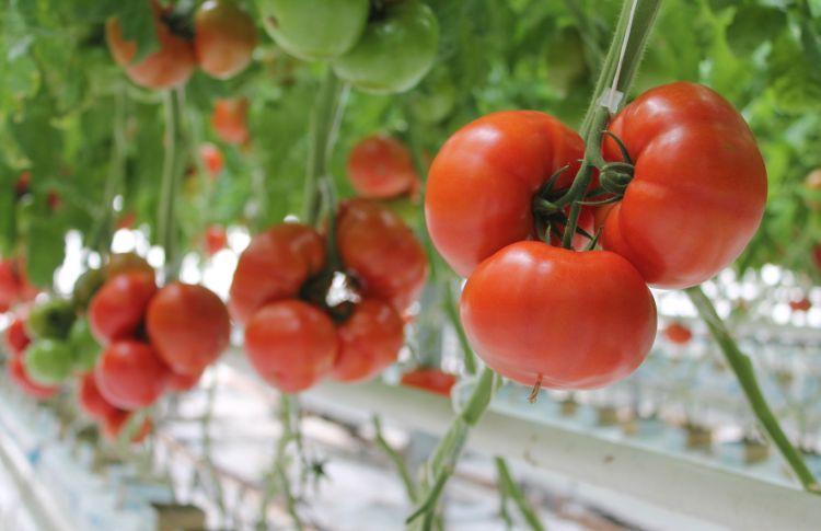 Który termin sadzenia najlepszy?