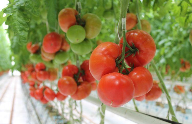 Specjaliści Tomato Academy polecają